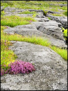 The Burren, Co. Clare seems odd in the middle of a lush green but the wild flowers and beautiful rocks are amazing