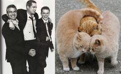 Kittens and Men. Repin by Inweddingdress.com #cute #cat #man