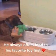 Cute Little Animals, Cute Funny Animals, Funny Cute, Cute Cats, Funny Cats And Dogs, Cute Animal Videos, Funny Animal Pictures, Animal Jokes, Cute Dogs And Puppies