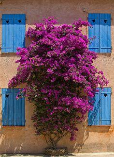 Windows in Ile-de-Porquerolles, Provence-Alpes-Côte d'Azur_ France