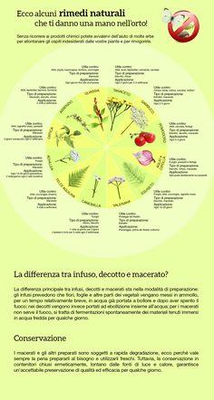 Proteggere le piante usasndo le piante Vegetable Garden, Garden Plants, Herbalism, Gardening, Vegetables, Health, Flowers, Pizza, Garden
