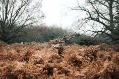 Trade 35 -Laura Maisey: For each trade I take my own selection of photos to capture the location. Laura lived next to the stunning deer of Richmond Park.