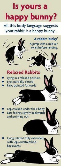 signs of a relaxed rabbit poster