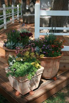 Potted perennials from 'The Polished Pebble' - so pretty