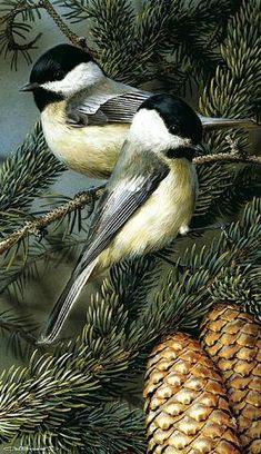 Chickadees, Wildlife bird art by Carl Brenders. All Birds, Little Birds, Love Birds, Angry Birds, Pretty Birds, Beautiful Birds, Animals Beautiful, Cute Animals, Exotic Birds