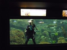 Cleaning the aquarium from the inside