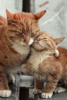 Hug from Mama Cat http://ift.tt/2qUVWXg