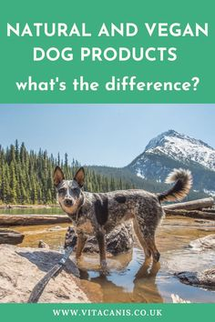 Find out more about natural dog products and their benefits for dog health issues. Vita Canis gives you all the advantages of natural dog remedies for dog health and wellness. #dogs #pethealth #dogproducts