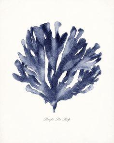 Coastal Decor Vintage Pacific Sea Kelp Giclee by vintagebytheshore