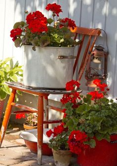 Geraniums are showy and gorgeous all summer yet hardy enough to last till spring if covered. A porch display is the perfect way to do that.