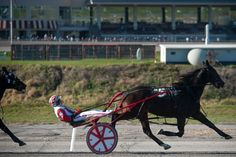 Lawrence Downs to work with The Meadows to set harness race times, purses | TribLIVE Mobile