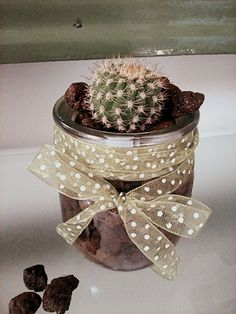 Hydroponic cultivation with cactus