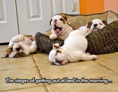 The stages of getting out of bed in the morning...