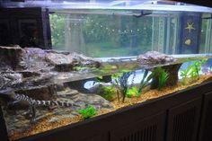 Aquarium Terrarium, Reptile Terrarium, Water Dragon Pet, Zoo Architecture, Turtle Aquarium, Reptile Room, Aquarium Design, Vivarium, Pet Home