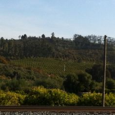 My favorite! Avocado orchards as far as the eye can see... Somis, CA