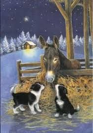 Image result for border collie christmas cards