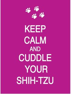 Cuddle Your Shih-Tzu --yes! i wuv mine!!!!
