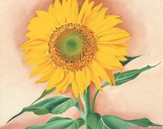Georgia O'Keeffe - A Sunflower from Maggie, 1937