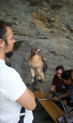 Falconry - a celebrated tradition on display at the Mid Summer Festival at Triora.