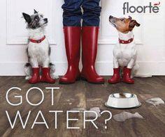 36 Best Shaw Resilient Images Hardwood Floors Kitchen