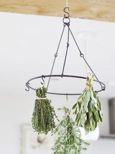 DIY herb drying...need to do this