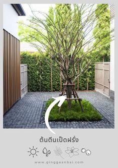 10 ต้นไม้ใหญ่ ทรงได้ฟอร์มดีที่ 'กิ่งฯ' ชอบใช้บ่อย ๆ Tropical Garden Design, Villa, Planting Flowers, Sidewalk, Landscape, Plants, House, Diy, Fantasy