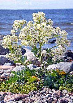 Saaristomeren kansallispuisto on oikea aarre.