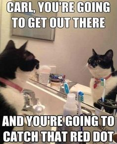 HA! This is so funny! I do this all the time with my moms cat!