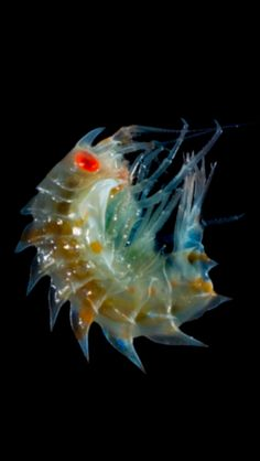 Strange new creature under the sea