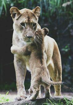 Amor de mãe...