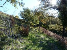 Montée vers la ferme Escanda, Roquiague, (montagne basque).