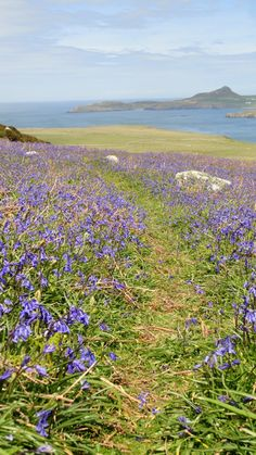 Landing on Ramsey Island and explore this beautiful RSPB Nature Reserve