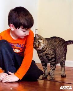 How do you teach kids and cats to get along? Follow these tips from our guest blogger: http://www.aspca.org/parents/term/teaching-kids-and-cats-get-along