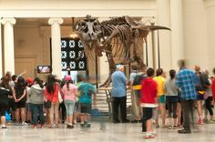 Learn about SUE, the largest T. rex ever found, during special programs at The Field Museum during Chicago Museum Week.