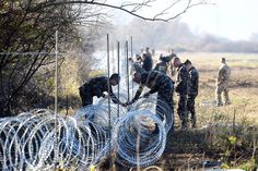 Deers and other animals caught in barbed wire are dying after prolonged agony, as border fences fragment territories and interrupt migration of Europe's biggest predators