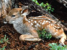 Wallpapers Of Baby Animals Group  1600×1200 Baby Animal Pictures Wallpapers (48 Wallpapers) | Adorable Wallpapers