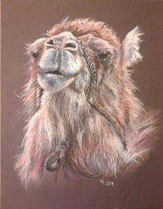 Camel, unknown species - soft pastels 30x40 cm