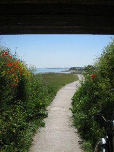 Cycle path on Ile de Re, France