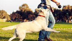 Teaching your puppy is about building your relationship with your canine and implementing boundaries. Be firm yet consistent and you'll see awesome results in your dog training adventures. Dog Training Near Me, Online Dog Training, Training Your Puppy, Training Tips, Training Classes, Large Dog Breeds, Large Dogs, Small Dogs, Dog Park