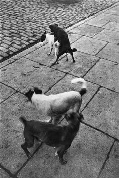 Paris, France, 1932 (© Magnum Photos, black & white), by photographer Henri Cartier-Bresson. Henri Cartier Bresson, Candid Photography, Animal Photography, Street Photography, Urban Photography, Vintage Photography, Dream Pictures, Old Pictures, Antique Pictures