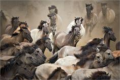 « Bei vollem Gallopp ... » von Helmut Adler