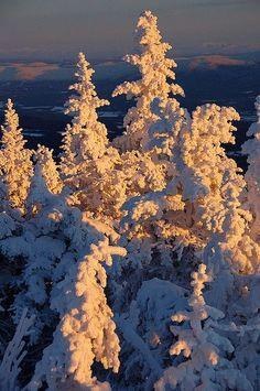 Winter's sun. by lauren