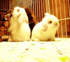 Ohh baby bunnies and their utter lack of awareness makes me giggle... they're clumsy little things.