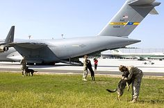 U.S. Navy and Marine military working dog handlers give their partners a break after an 8-1/2 hour flight on a C-17 Globemaster III aircraft to Ramstein Air Base, Germany, May 11, 2006. U.S. Air Force photo by Master Sgt. John E. Lasky