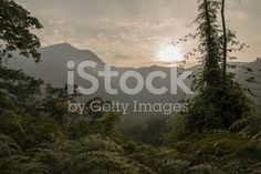 Ciudad Perdida in the Caribbean of Colombia Royalty Free Pictures, Royalty Free Stock Photos, Tree Id, Good Times, Caribbean, Sunset, Explore, Beach, Water