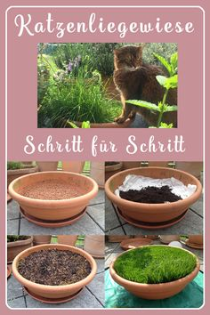 It's so easy to plant a cat lying way. For nibbling, resting and as a refreshing berth in summer. It's so easy to plant a cat lying way. For nibbling, resting and . Cat-Competence ruthenfranz Katzen & Katzenhalter-Tipps It's so easy t Cat Garden, Garden Plants, Indoor Plants, Cat Steps, Gatos Cats, Cat Playground, Garden Animals, Owning A Cat, Cat Room