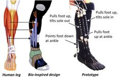 Robotic Ankle Could Help Increase Mobility In Injured People...  Hmm maybe help my ankle