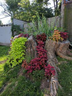 This giant tree stump turned beautiful garden : mildlyinteresting Garden Yard Ideas, Garden Trees, Lawn And Garden, Garden Projects, Garden Art, Garden Design, Garden Ideas With Tree Stumps, Fairies Garden, Tree Stump Decor
