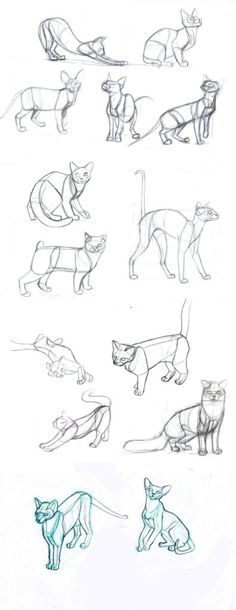 Gatos para dibujar 12 Animal Sketches, Art Drawings Sketches, Animal Drawings, Cool Drawings, Drawings Of Cats, Hipster Drawings, Drawing Animals, Cat Reference, Art Reference Poses
