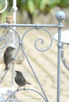 Little visitors~